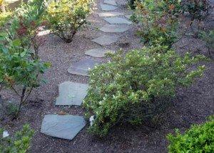 Flagstones through rose garden